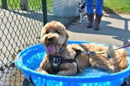2017 dog in pool