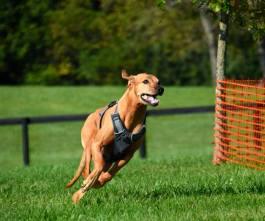 2017 dog race 3